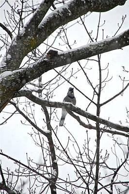 Photograph - Snow Bird by Matthew Heller
