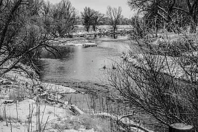 Photograph - Snow Bird by Tyson Kinnison