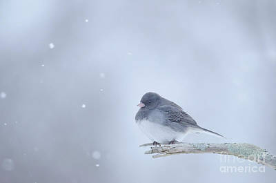 Art Print featuring the photograph Snow Bird by Wanda Krack