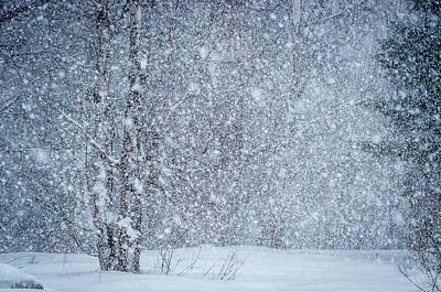 Photograph - Snow Blind by Gary McCormick