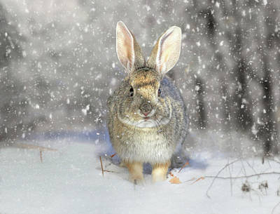 Photograph - Snow Bunny by Donna Kennedy