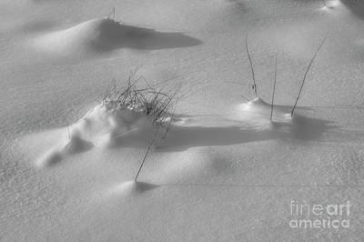 Frost Photograph - Snow Bw by Veikko Suikkanen
