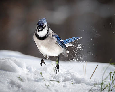 Photograph - Snow Can Be Fun by Amy Porter