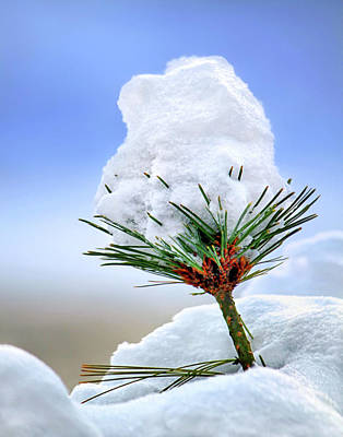 Photograph - Snow Cap by Carolyn Derstine