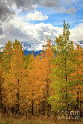 Photograph - Snow Capped Mountains On A Fall Day by Ronda Kimbrow