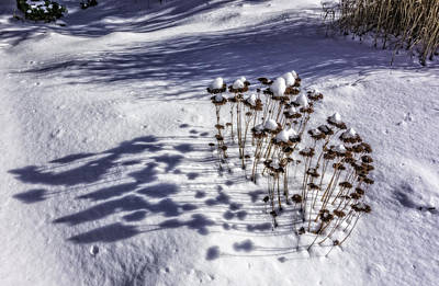 Photograph - Snow Caps by Gary Shepard