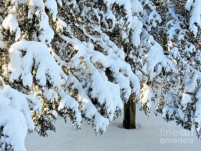 Photograph - Snow Claws by Janice Drew