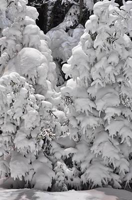Art Print featuring the photograph Snow Coat by Alex Grichenko