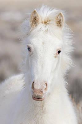 Wild Horses Photograph - Snow Colt by Carol Walker