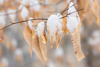 Photograph - Snow Cones by Sara Hudock