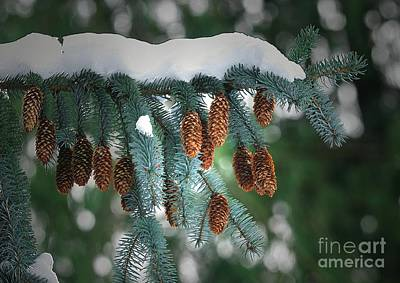 Photograph - Snow Cones by Sharon Talson