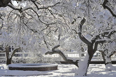Photograph - Snow Covered Apple Trees by Jim Brage
