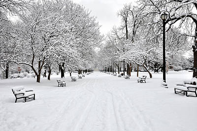 In A Row Photograph - Snow Covered Benches And Trees In Washington Park by Shobeir Ansari