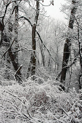Elmira Ny Photograph - Snow Covered Branches by Debbie Fieno
