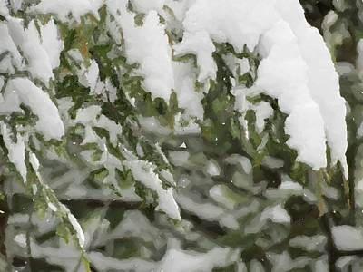 Photograph - Snow Covered Branches by Donna Cavanaugh