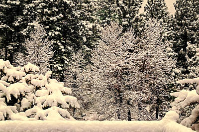 Photograph - Snow Covered Bushes And Trees by Maria Coulson