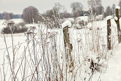 Photograph - Snow Covered Fence by Sophie McAulay