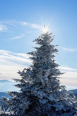 Photograph - Snow Covered Fir Tree by Serge Skiba