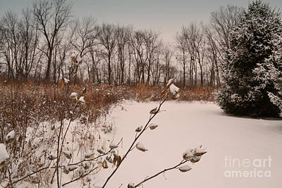 Indiana Photograph - Snow Covered Flower Pods by Amy Lucid