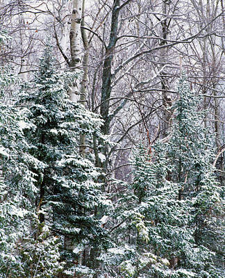 Snow-covered Forest, Wisconsin, Usa Art Print by Panoramic Images