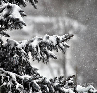 Photograph - Snow Covered by Kerri Farley