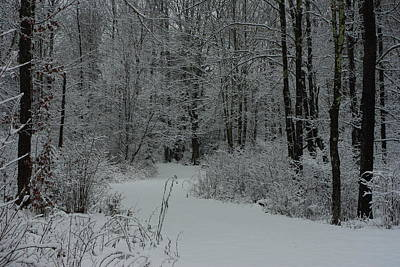 Flags On Faces Semmick Photo - Snow covered path into the woods by Alice Markham