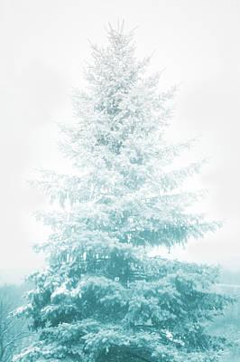 Snow Covered Pine Tree Art Print by Art Spectrum