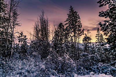 Photograph - Snow Covered Pine Trees by Lester Plank