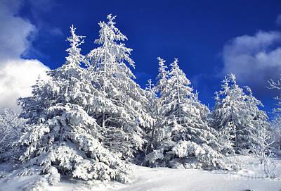 Virginia Snow Photograph - Snow-covered Pine Trees by Thomas R Fletcher