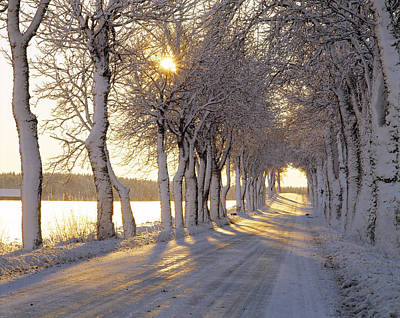 Golden Orb Photograph - Snow Covered Road by Panoramic Images