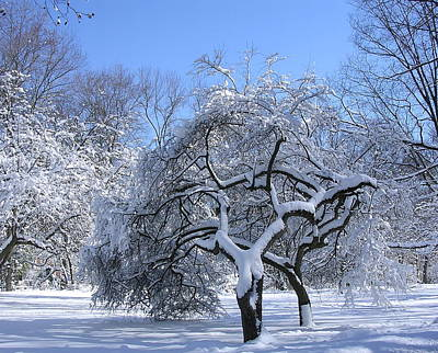 Photograph - Snow-covered Sunlit Apple Trees by Byron Varvarigos