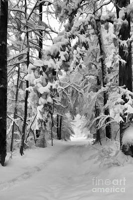 Photograph - Snow Covered Trail by Dan Friend