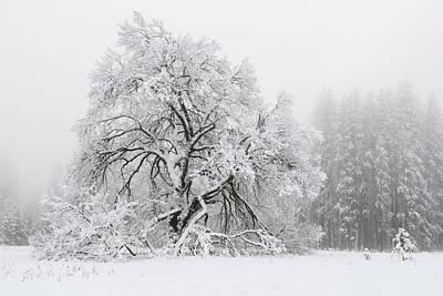 Snow-covered Tree Original