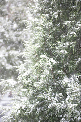 Photograph - Snow Covered Tree by Dale Powell