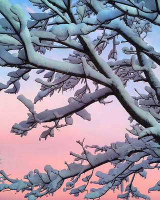 Photograph - Snow Covered Tree Sunset by Joann Vitali