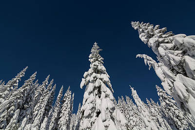 Park Scene Photograph - Snow Covered Trees 2 by Pelo Blanco Photo