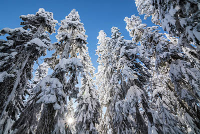 Park Scene Photograph - Snow Covered Trees 3 by Pelo Blanco Photo