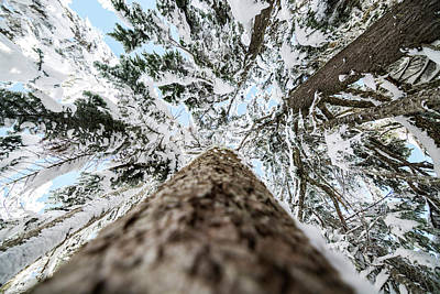 Park Scene Photograph - Snow Covered Trees 4 by Pelo Blanco Photo