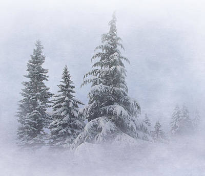 Snow Covered Trees Art Print by Angie Vogel