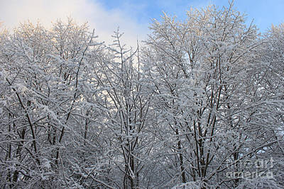 Winter Photograph - Snow Covered Trees by Carolyn Brown