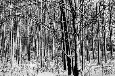 Photograph - Snow Covered Trees In Winter by Randall Nyhof