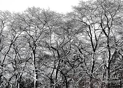 Its A Piece Of Cake - Snow Covered Trees in WNY with an Ink Sketch Effect by Rose Santuci-Sofranko
