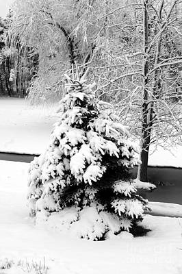 Snow Covered Trees Art Print by Kathleen Struckle