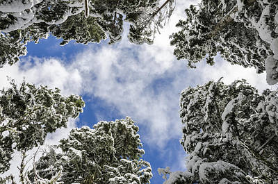 Snow Covered Trees Photograph - Snow Covered Trees by Pelo Blanco Photo