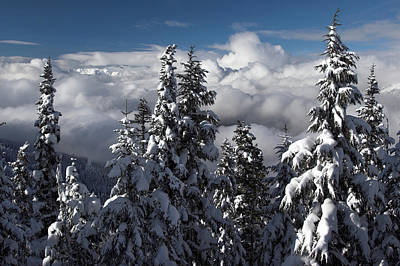 Photograph - Snow Covered Trees Whistler Mountain British Columbia by Pierre Leclerc Photography