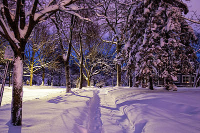 Photograph - Snow Covered Walk In Northfield by Joe Miller