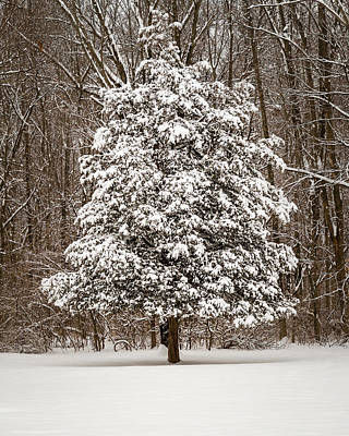 Photograph - Snow Covered Evergreen by Ron Pate