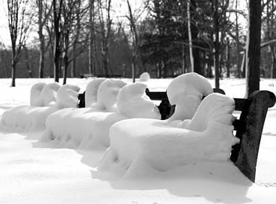 Snow Cushions Art Print by Freda Sbordoni