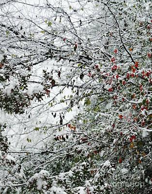 Photograph - Snow Day 1 by Lizi Beard-Ward