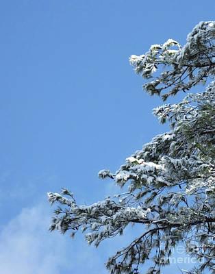 Photograph - Snow Day 11 by Lizi Beard-Ward